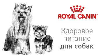 rc-dog-banner-2017