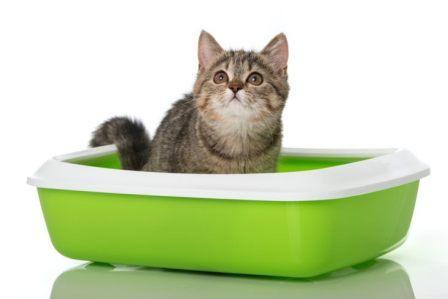 Как выбрать наполнитель для кошачьего туалета?