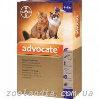 Приют для бездомных кошек Новый дом| СПб | VK