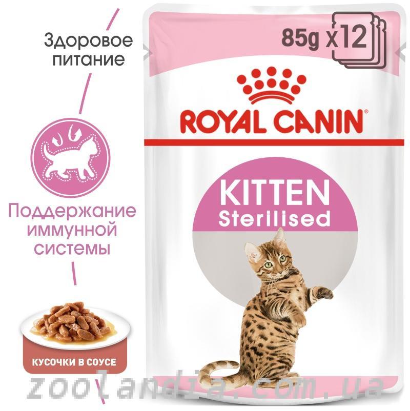 Royal Canin Renal RF - Kat Hond Veterinary Diet
